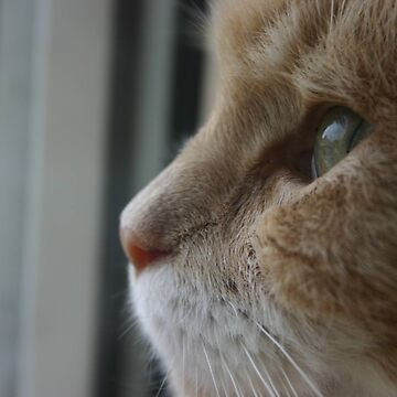 Kitten, Looking out. by DennisNewsome
