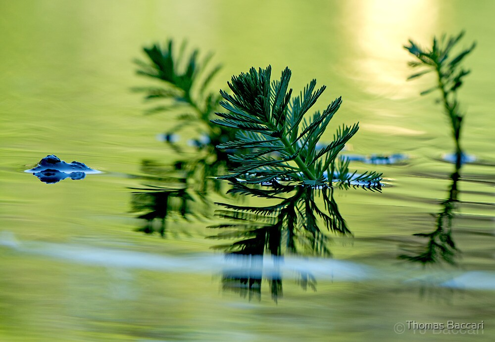 In The Lake by TJ Baccari Photography