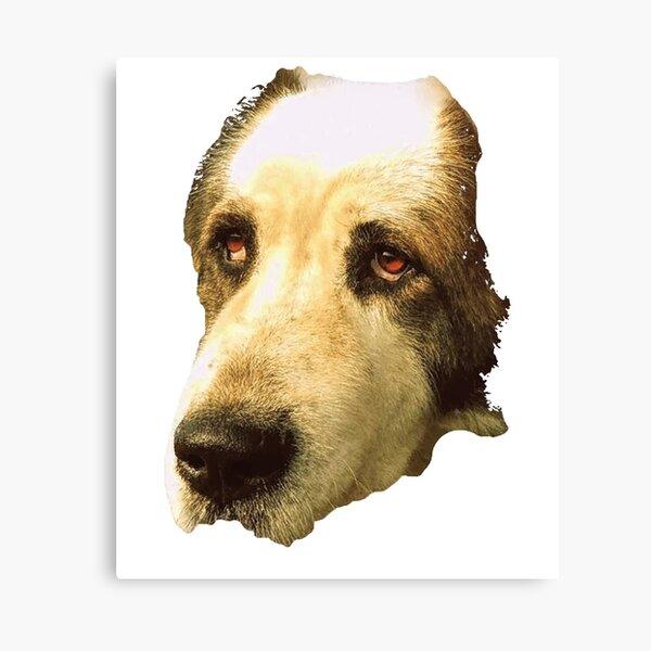 big sad dog Canvas Print