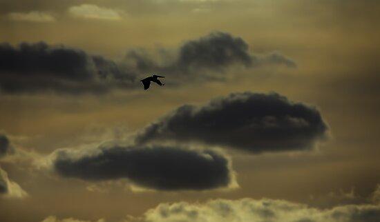 Australian Pelican Silhouette by Les Imgrund