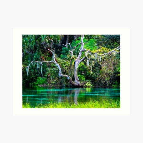 Emerald Paradise, Rainbow Springs Florida Art Print