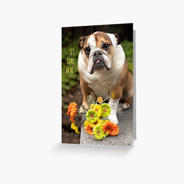 Sit. Stay. Heal. Greeting Card