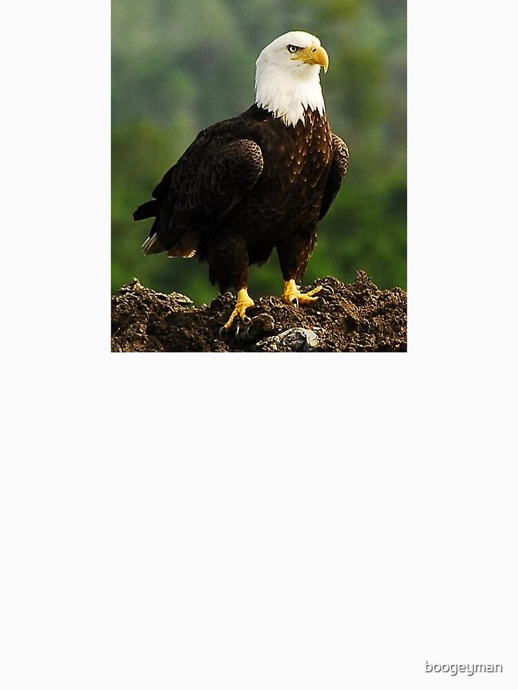 Bald Eagle by boogeyman