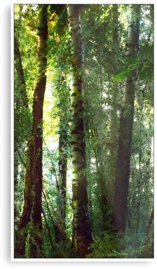 Birch Trees in the Sidhe's Land by karaskye