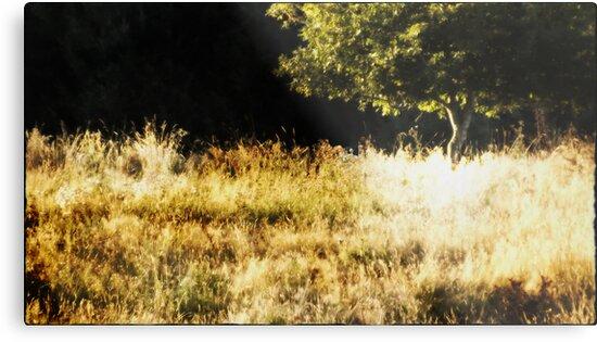 Out the Runner - Tree Along the Runner's Trail by karaskye