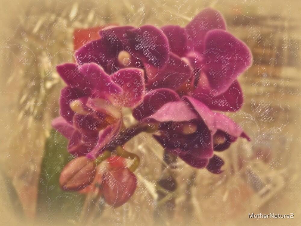 Victorian Velvet Vision - Moth Orchid by MotherNature2