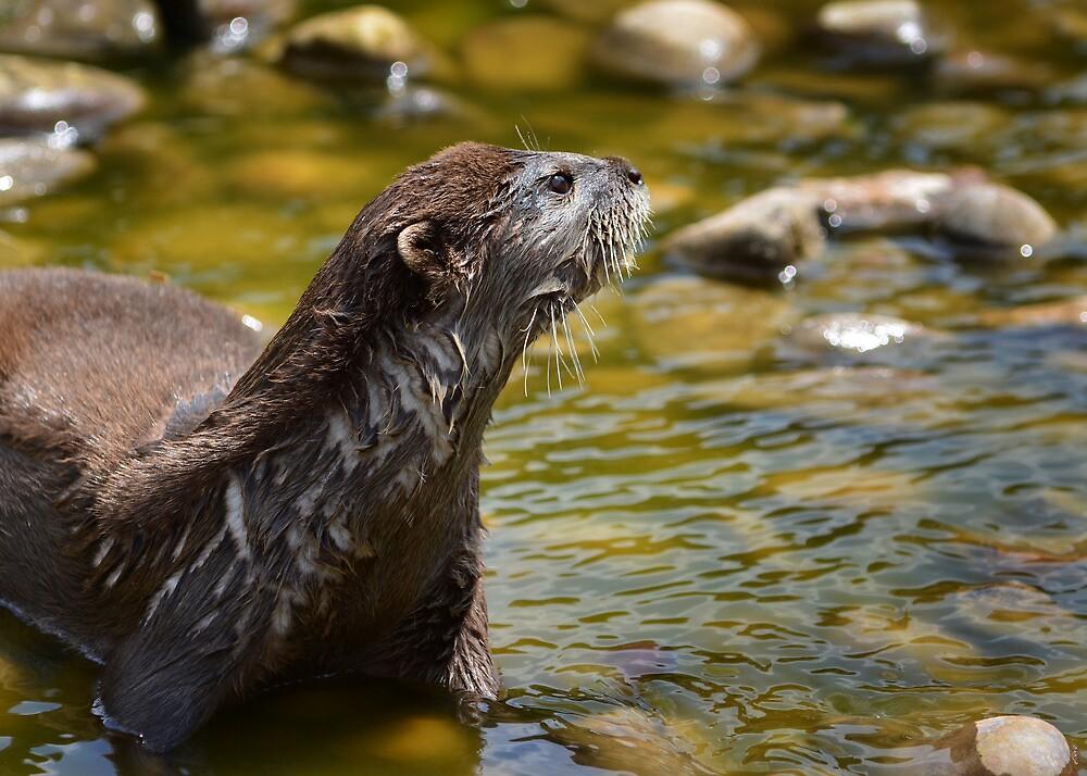 Sodden Otter by Matt West