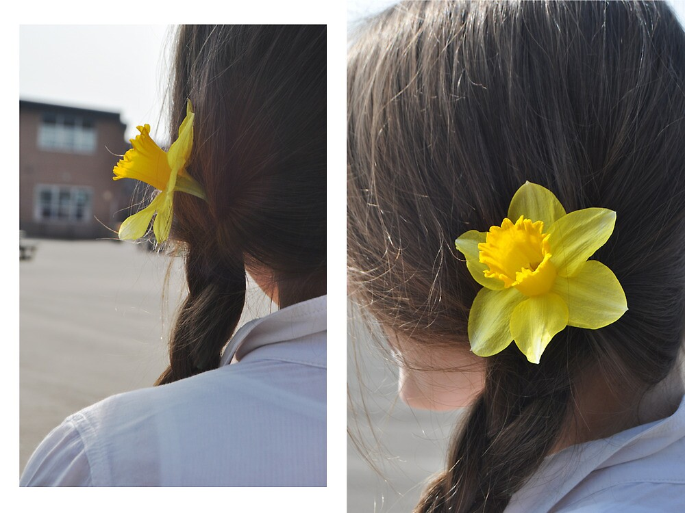 daffodil by Angharad Sophie