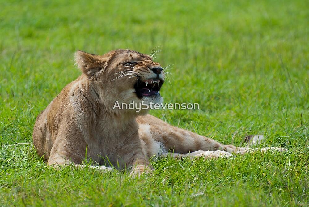 Lion Cub by AndyStevenson