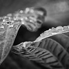 After the Rain by Tracy Friesen