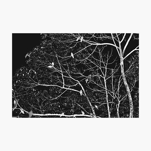 progenies of night  Photographic Print