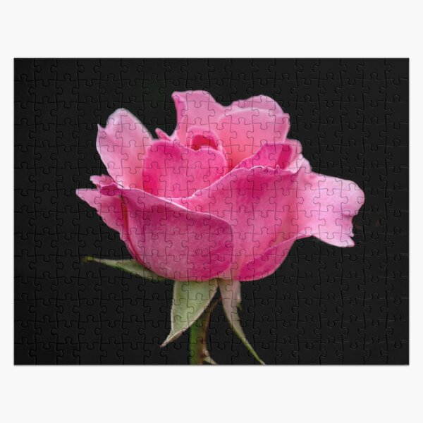 Pink Rose Jigsaw Puzzle