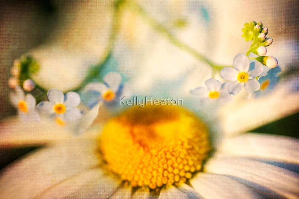 Daisy and Forget-Me-Nots by KellyHeaton