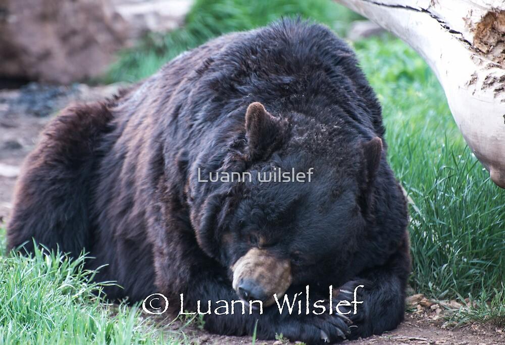 Napping by Luann wilslef