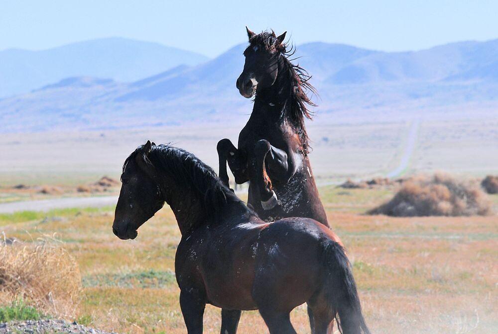 Pony Express-2 by Kelly Jay