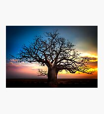 Dusk At The Dinner Tree Photographic Print