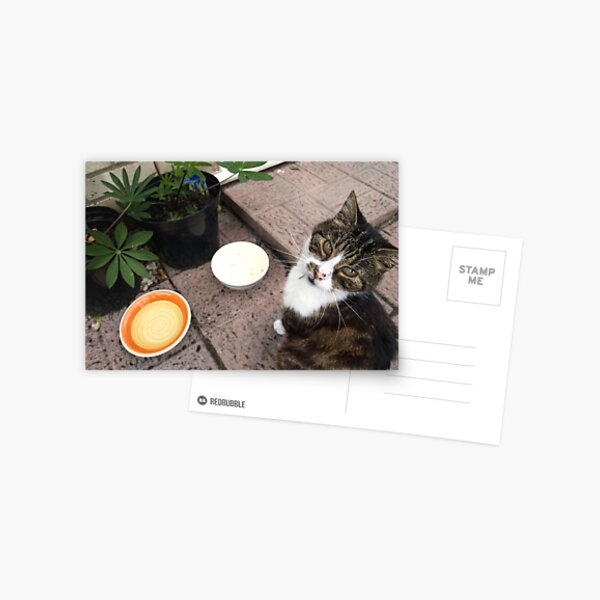 Hungry cat Postcard