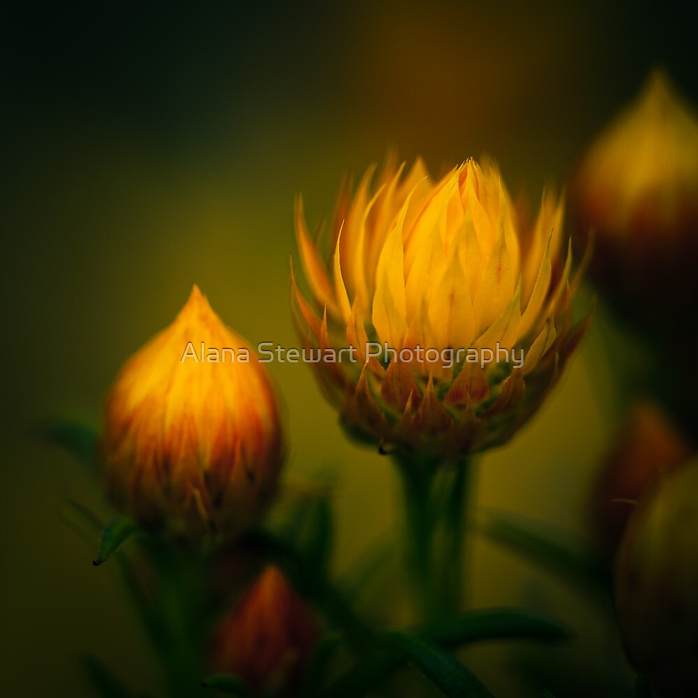 Wild Flower Still Life by Alana Stewart Photography