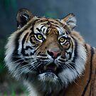 Hello Tiger II by Adam Le Good
