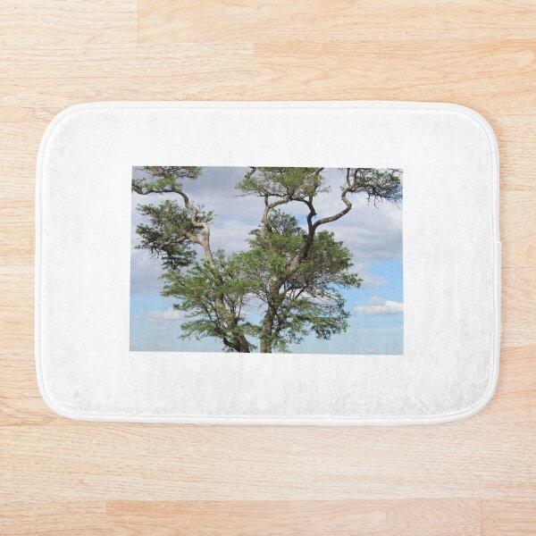 Perched On a Tree Bath Mat