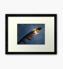 Magpie feather Framed Print