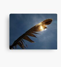 Magpie feather Canvas Print