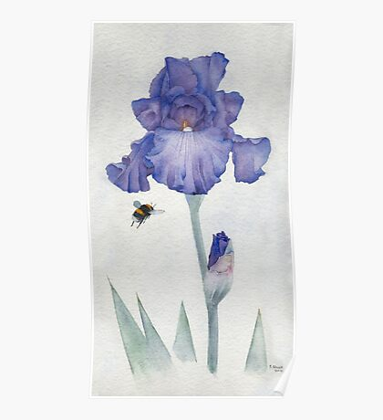 Blue Iris with Bee Poster
