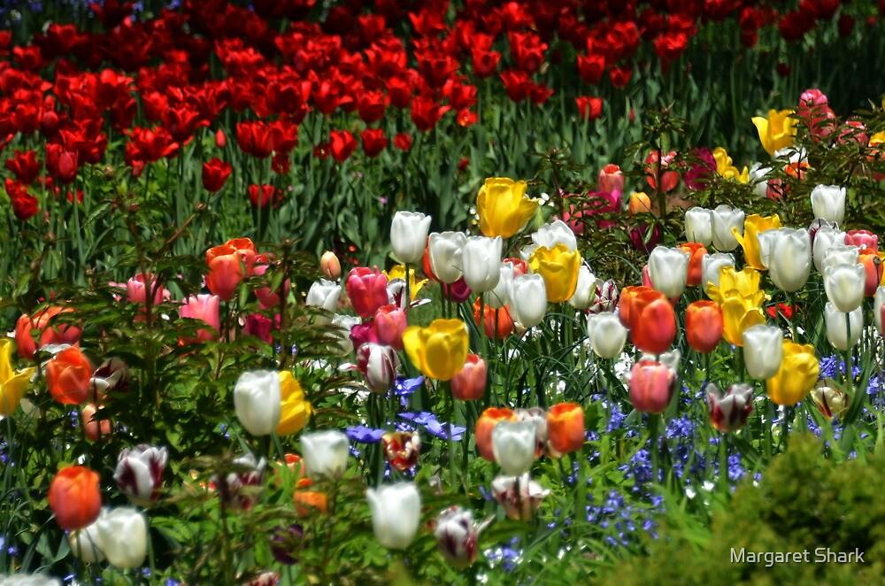 Tulips by Margaret Shark