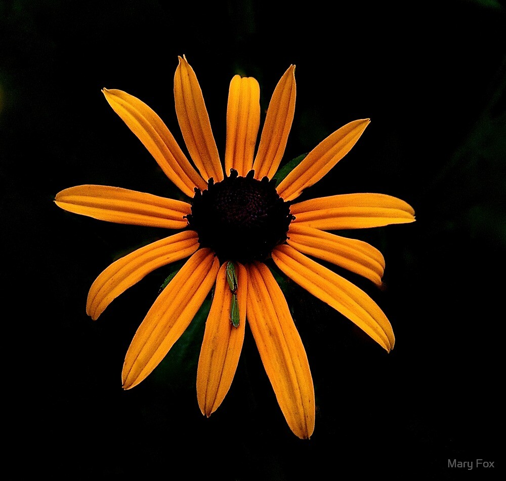 A Burst of Color by Mary Fox