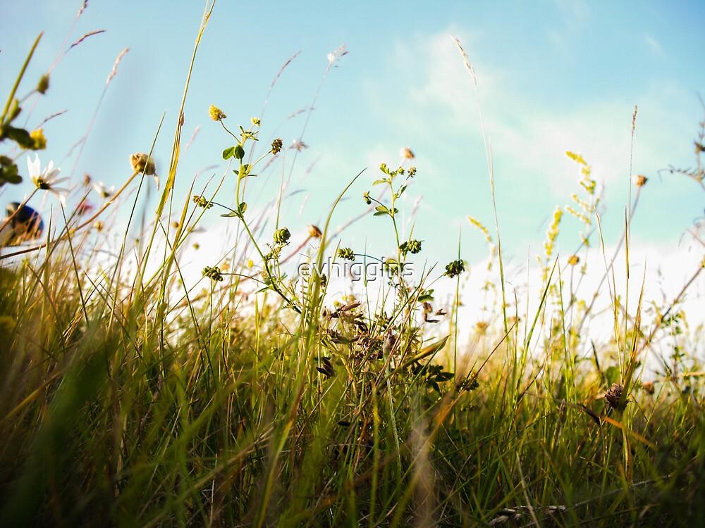 Summer Meadow by evhiggins