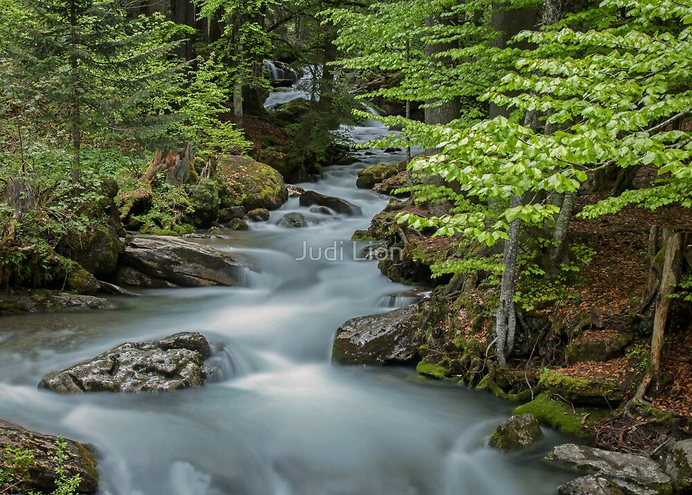 Falls on the River Ardent by Judi Lion