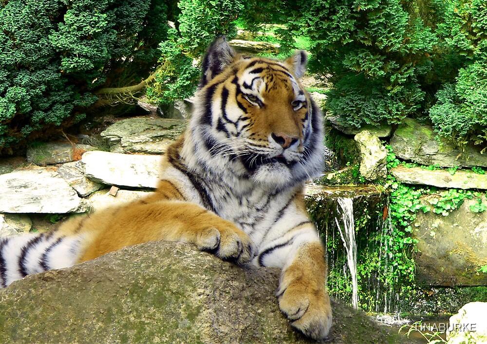 Tiger by TINABURKE