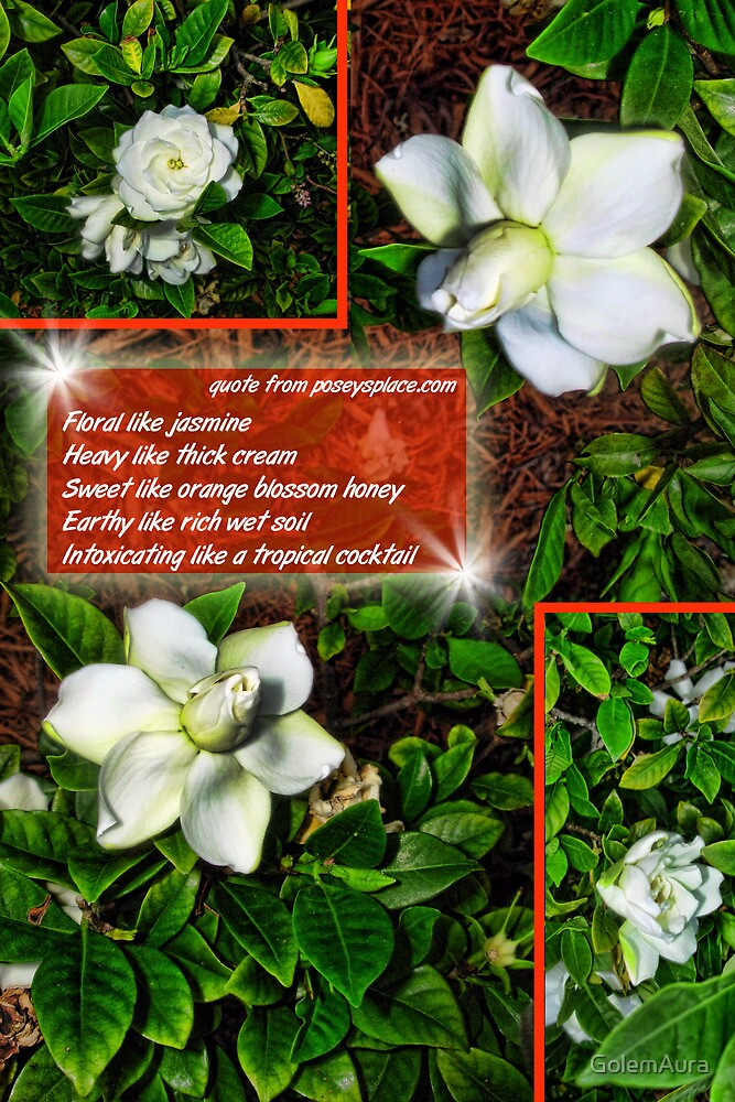The Smell of Gardenia by GolemAura