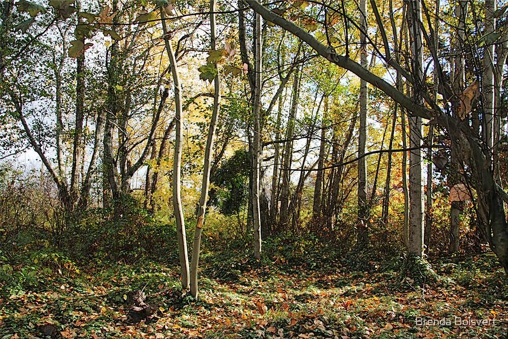 ~ An Autumn Forest ~ by Brenda Boisvert