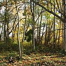 ~ An Autumn Forest ~ by Brenda Boisvert