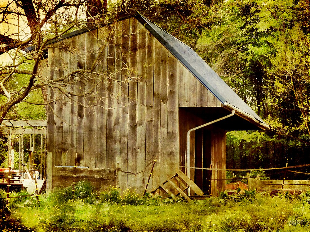 The old lean to shed by vigor