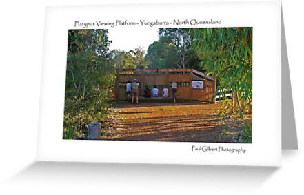 Platypus viewing platform - North Queensland  by Paul Gilbert