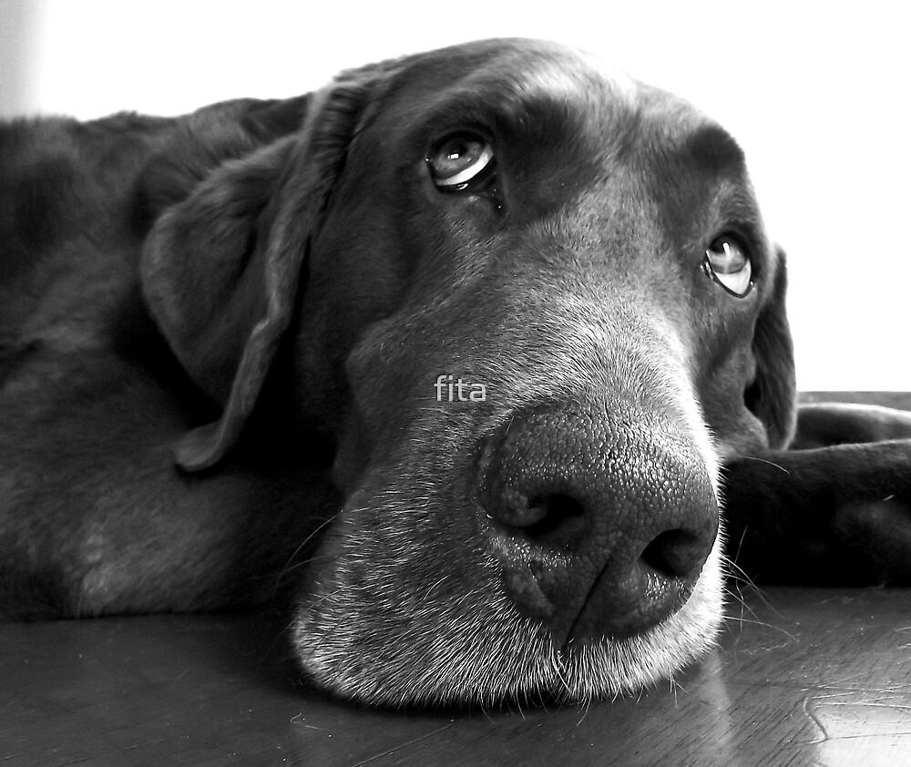 Choco, the dog by fita