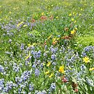 Wildflowers at Cedar Breaks No. 1 by halabilly