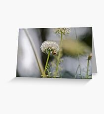Dandelion and abstract 1 Greeting Card