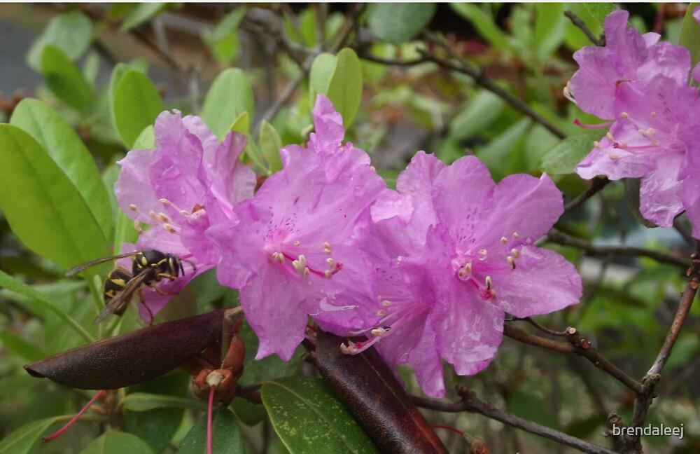 Bee on a Pleasing purple flower by brendaleej