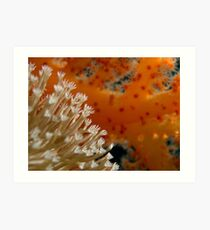 Oranges are the only fruit Art Print