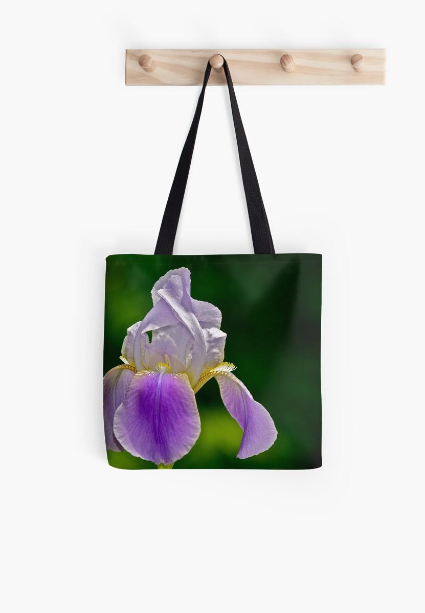 Purple Iris 3 by Carolyn Clark