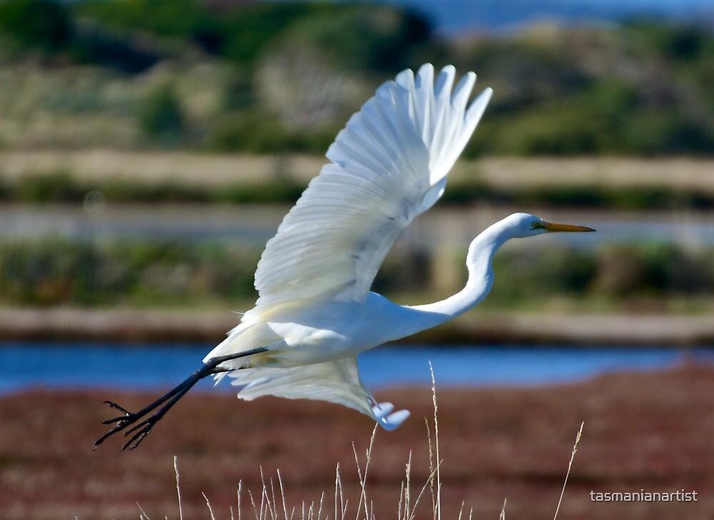 Great Egret by tasmanianartist
