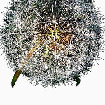 Dandelion by zobear-xoxo
