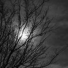 Full Moon by diveroptic
