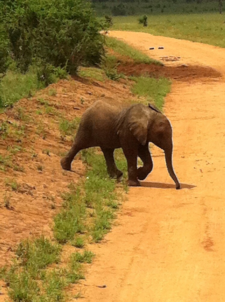 Baby elephant in Savo by namdoog12
