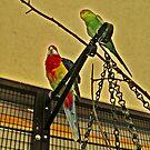 Tropical Birds At Mystic Aquarium by Jane Neill-Hancock