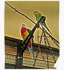 Tropical Birds At Mystic Aquarium Poster