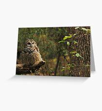 Barred Owl (Strix varia) Greeting Card